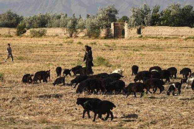 L'Onu lance un appel aux donateurs pour aider l'Afghanistan face à la sécheresse