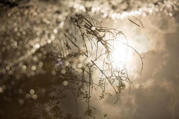 Lente komt opnieuw piepen, maar wordt weggejaagd door regen