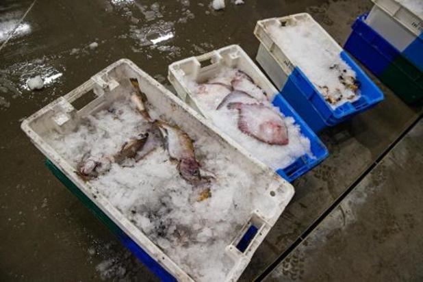 Le chiffre d'affaires de la pêche maritime belge a reculé à cause de la crise