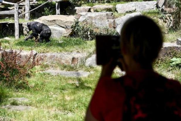 Vingt-quatre emplois menacés au zoo d'Anvers et à Planckendael