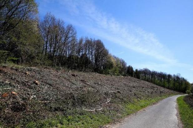Disparition d'Estelle Mouzin: reprise des fouilles lundi dans les Ardennes