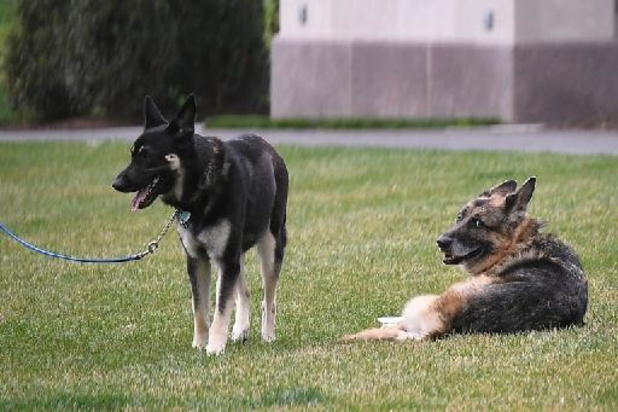 Hond van Amerikaans president Joe Biden krijgt extra training na nieuw bijtincident