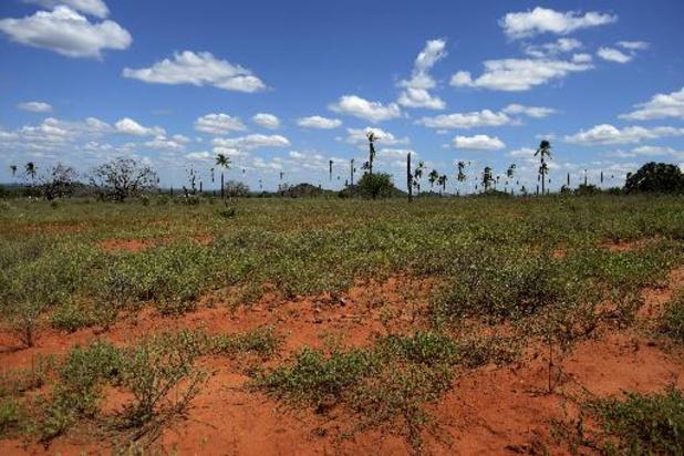 L'Europe est le deuxième plus grand importateur de produits issus de la déforestation