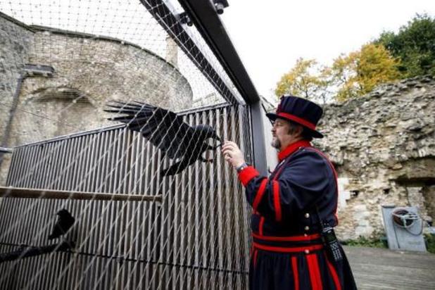 """Ravenkoningin"" Tower of London verdwenen"
