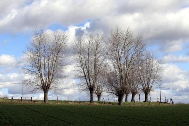 Météo - Des rafales de vent jusqu'à 65 km/h attendues ce dimanche