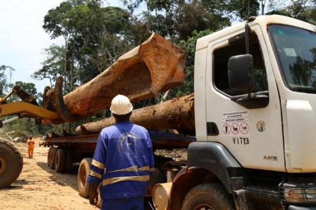 Wereldwijde ontbossing ondanks trager tempo nog steeds alarmerend