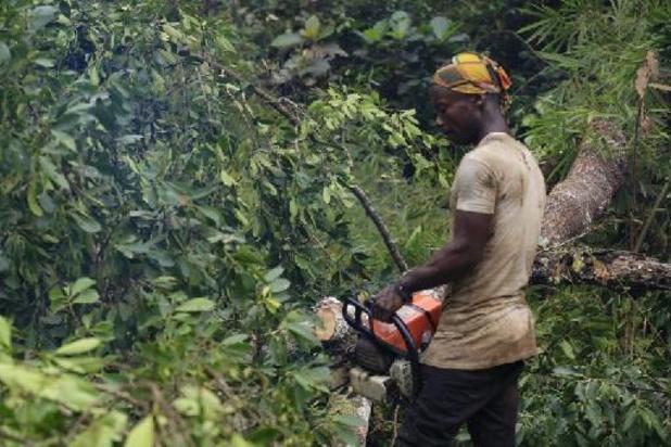 Exploitation de la forêt congolaise: des ONG alertent les bailleurs de fonds