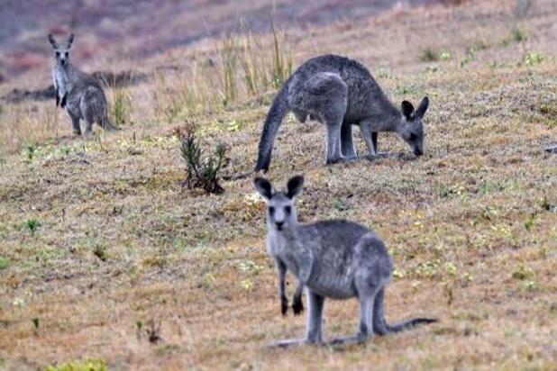 """WWF België start geldinzameling na """"ecologische ramp"""" in Australië"""