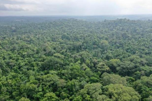 Tropische Afrikaanse bergwouden slaan meer koolstof op dan gedacht