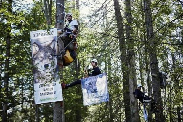 Europese Commissie heeft nieuwe strategie voor Europese bossen klaar