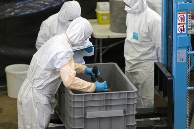 Ook voor wereldorganisatie diergezondheid is varkenspest uitgeroeid in België