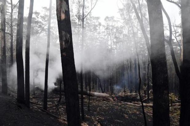Incendies en Australie - Un premier bilan chiffre à plus de 400 millions les dégâts des feux de forêts en Australie