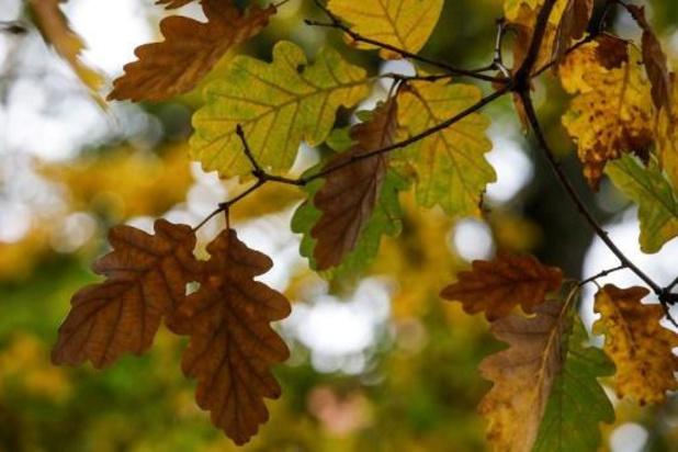 Weerbericht - Opnieuw een zachte herfstdag
