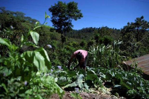 Le libre-échange envisagé pour assurer l'approvisionnement alimentaire mondial