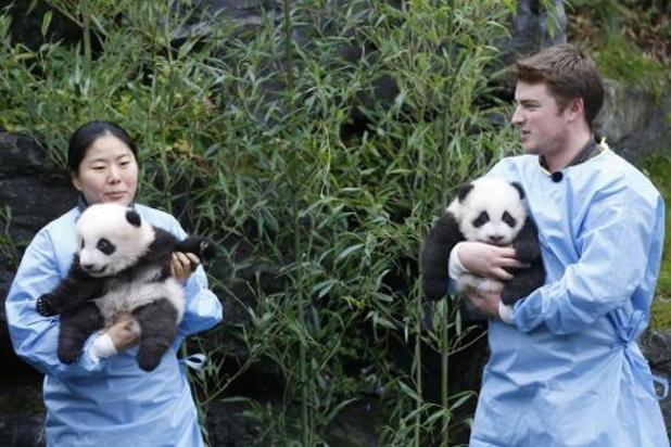 Tweeling reuzenpanda's Bao Di en Bao Mei gedoopt