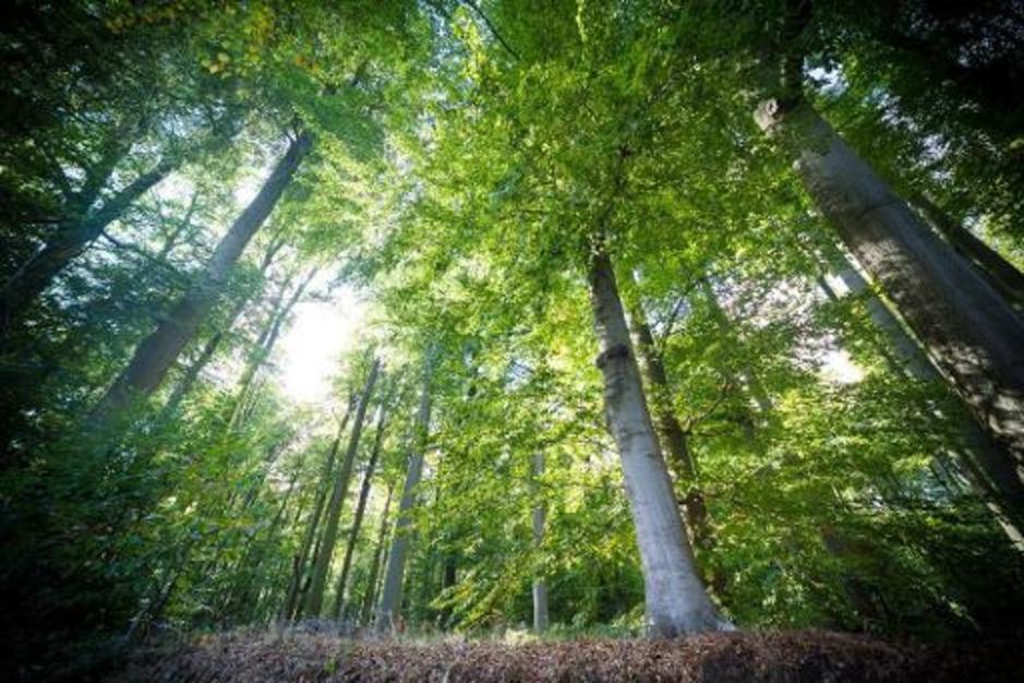 Factcheck: ja, onder de huidige Vlaamse regering werd al meer dan één miljoen nieuwe bomen geplant