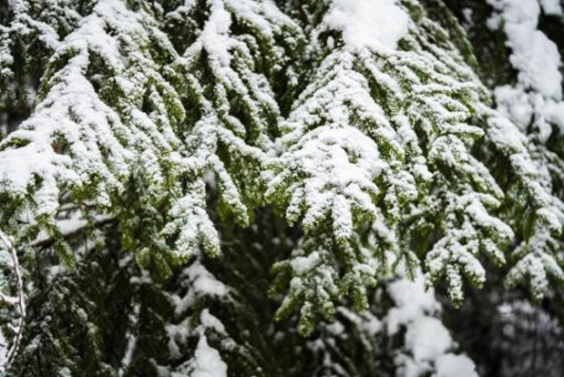 Kwik stijgt volgende week tot 10 graden