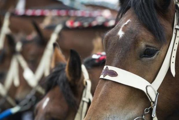 Geen paarden meer op kermis in 2023