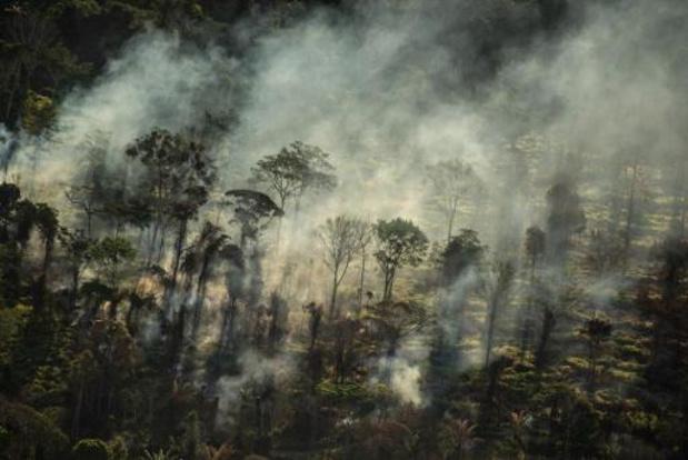 Weer 8400 vierkante kilometer van Amazone ontbost