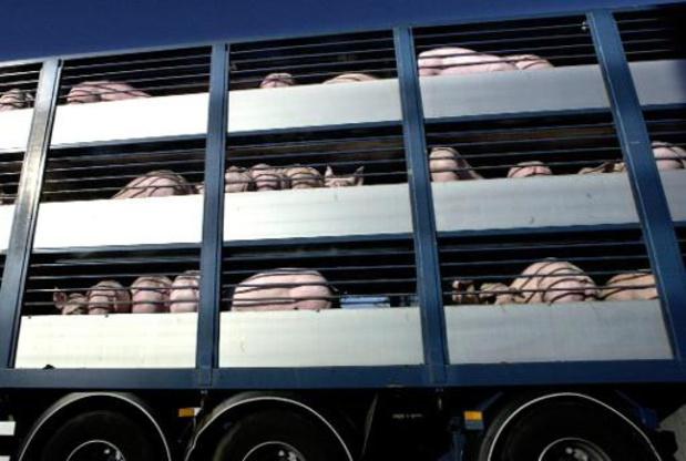 Une pétition contre le transport des animaux en période de canicule
