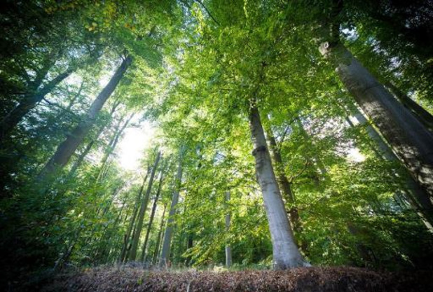 Extreme droogte nefast voor gezondheid Vlaamse bossen