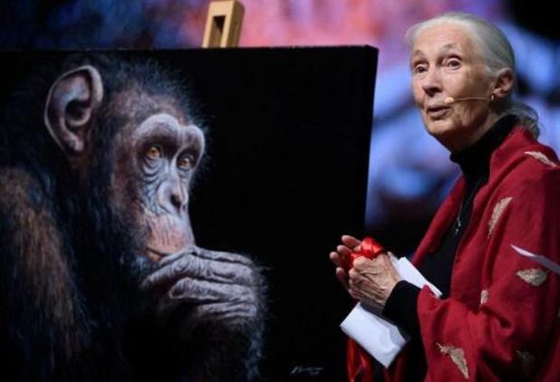 UHasselt reikt eredoctoraat uit aan Jane Goodall