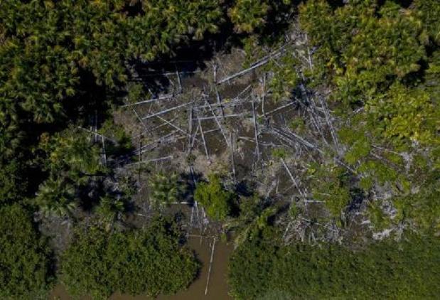 België bij grootste Europese importeurs producten uit ontbossing