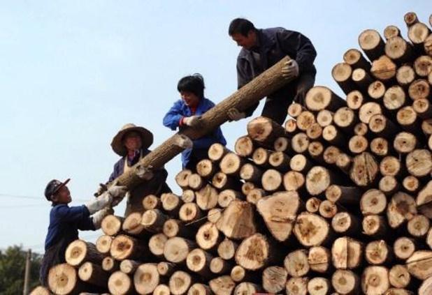 WWF vraagt oprichting expertisecentrum in strijd tegen illegale houthandel in België
