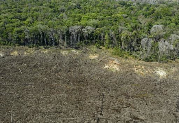 Brésil: Bolsonaro promet la fin de la déforestation illégale d'ici 2030