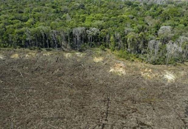 Studie: Ontbossing in Brazilië kan in 2100 leiden tot extreme hitte