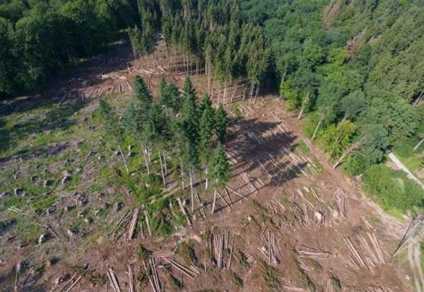 EU kan meer doen om bossen te beschermen