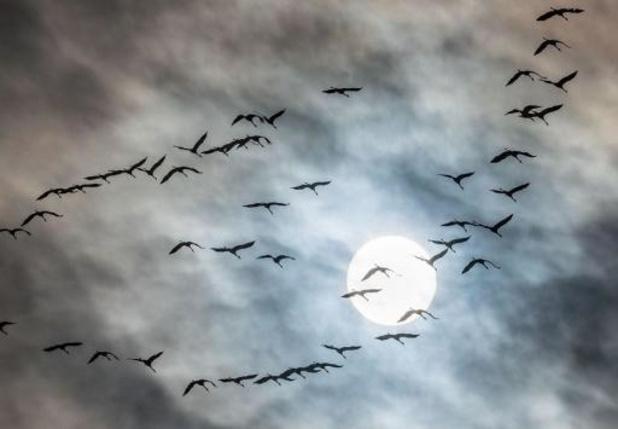 Weerbericht: droog maar grijs weer in Vlaanderen