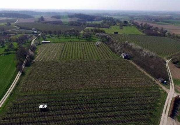 'Op het snijvlak tussen landbouw en natuur: het onbekende potentieel van voedselbossen'