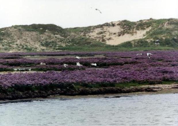 Op één dag twee unieke vogelsoorten waargenomen en geringd in het Zwin