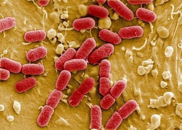 Strijd tussen bacteriën biedt weerstand tegen antibiotica
