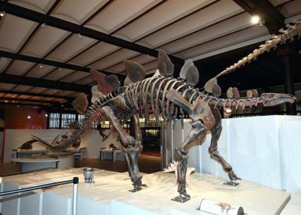 Le plus grand dinosaure découvert en Australie identifié comme une nouvelle espèce