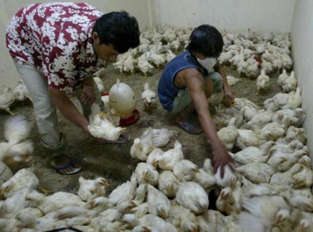 Chine: premier cas humain de grippe aviaire H10N3