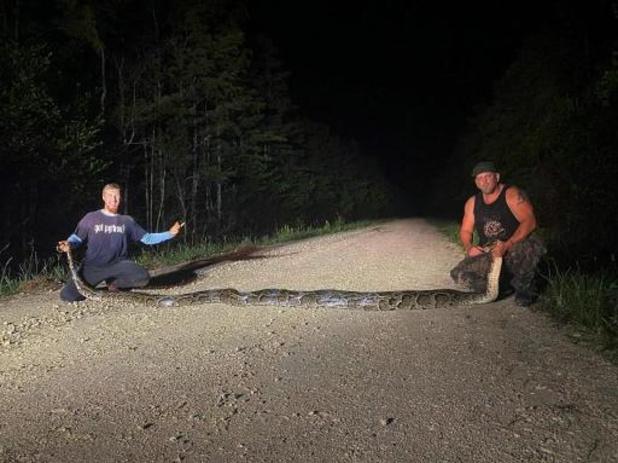 Bijna zes meter lange python gevangen in Florida