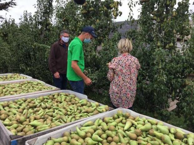 Tussen de 5.000 en 7.000 studenten helpen bij fruitpluk