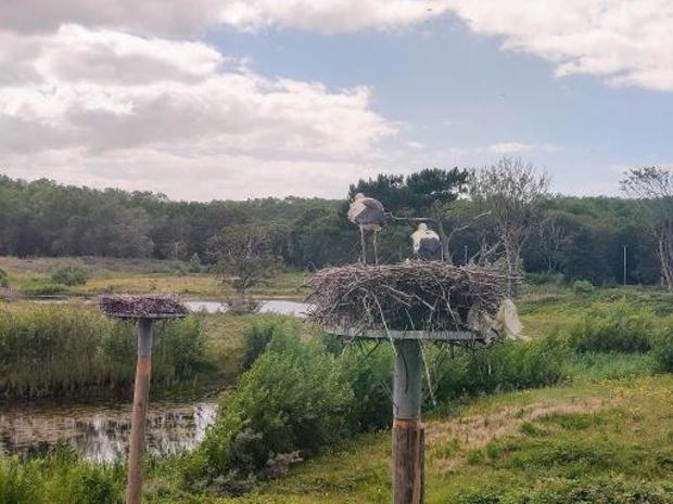 Zwin Natuur Park stelt resultaten ooievaarszenders voor