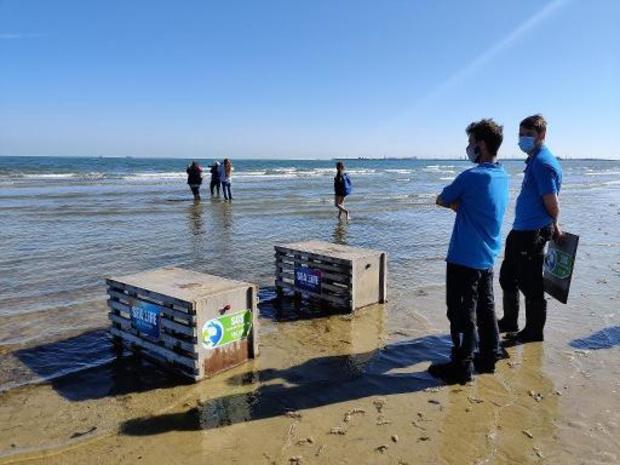 Sea Life Blankenberge laat twee zeehondjes vrij
