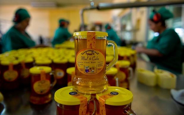 Le bonheur des abeilles, secret du miel cubain, si prisé en Europe?