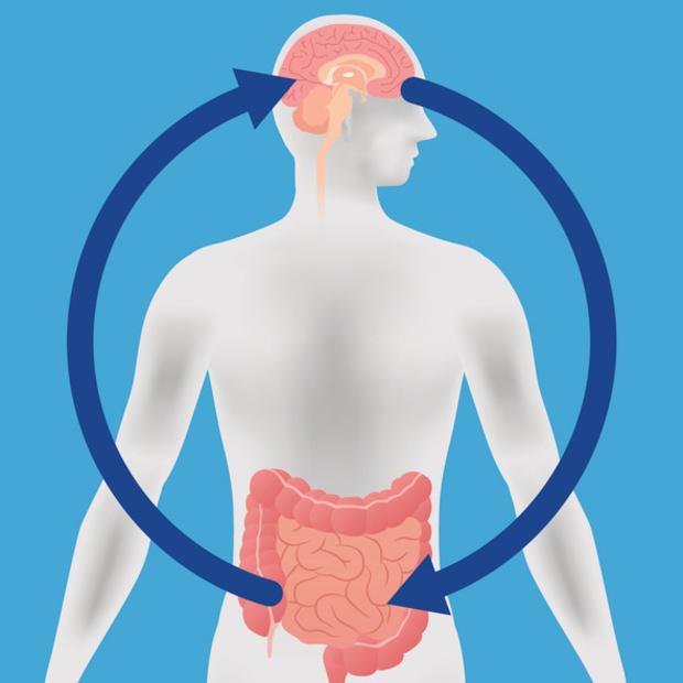 Intense communicatie tussen hersenen en darmen