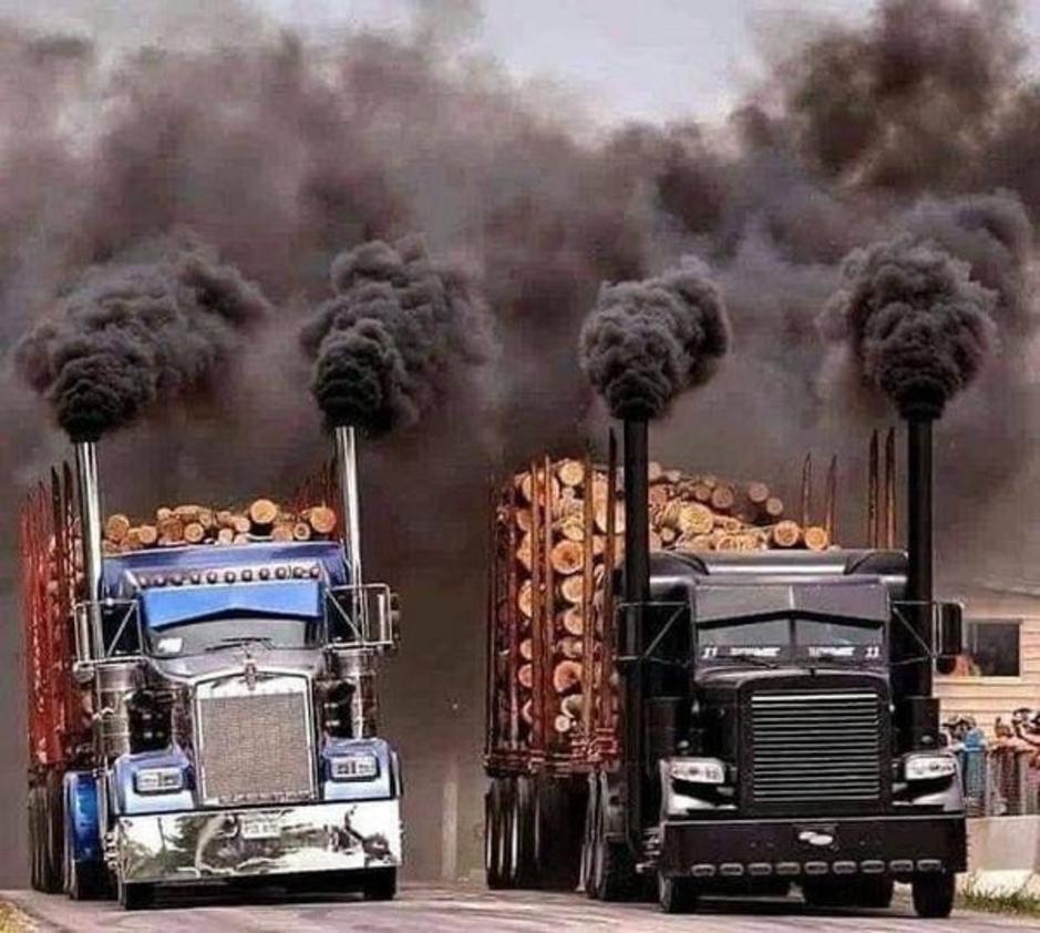 Factcheck: nee, deze trucks rijden niet naar een biomassacentrale