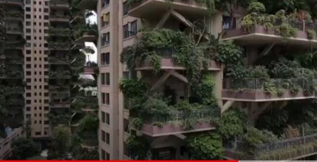 ARCHI: Quand des immeubles végétalisés se transforment en jungle inhabitable (vidéo)