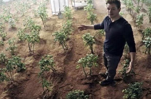 Des premiers rendements corrects pour la pomme de terre malgré la vague de chaleur