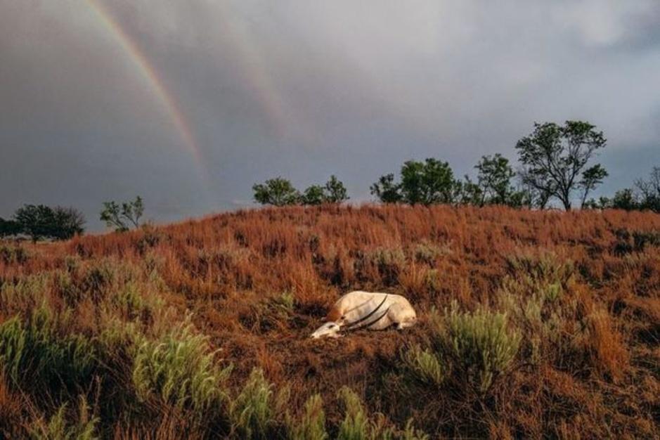 Safari au Trumpland ou l'organisation ahurissante de chasses d'animaux exotiques (en images)
