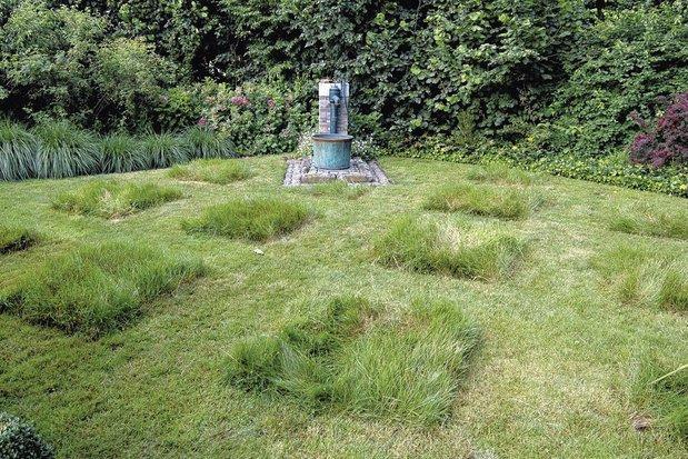 En mai, tonte à l'arrêt : 5 conseils ultimes pour une pelouse saine