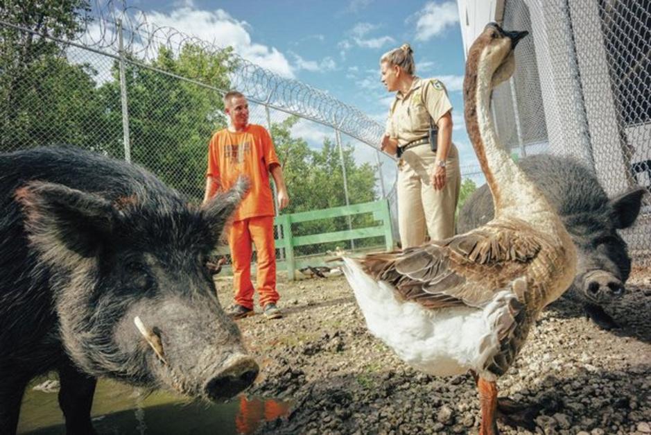 Aux USA, une prison animaux admis (en images)
