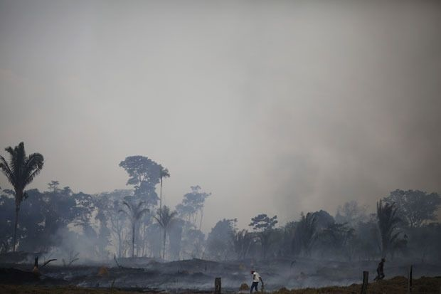 Studie: EU voert elk jaar grote hoeveelheden ontbossing in